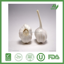 China farm selling fresh garlic