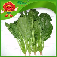 2015 new crop frozen spinach top quality fresh vegetables