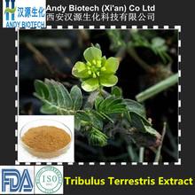 Good Supplement High Quality Low Price Tribulus Terrestris Powder 60% Saponins