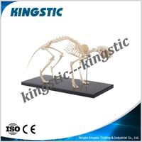cat skeleton model,animal skeleton model,artificial skeleton