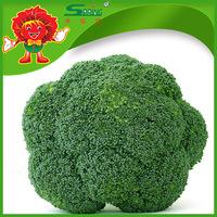 Wholesale bulk broccoli spears with low price, frozen broccoli on sale