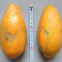 mu gu zhong zi papaya seeds red lady papaya