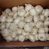 cold store good quality cheap price pure white garlic