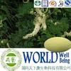 Hot sale Black Cohosh extract/Triterpenes 15%/Anti-inflammatory Free sample