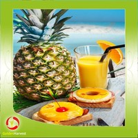 Fruit Concentrate Aseptic Pineapple juice