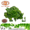 100% Ginkgo Leaf Extract 24% Bio flavone 6% lactone/ CP 2005 Ginkgo biloba Powder Extract / Ginkgo Powder Extract