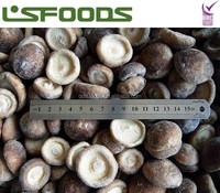 Frozen IQF Shiitake Mushroom/Champignon/Xianggu/Lentinus edodes