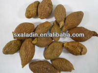 Ellagic Acid Galla Chinensis P.E