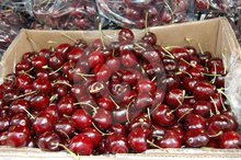 Fresh Cherries from Chile