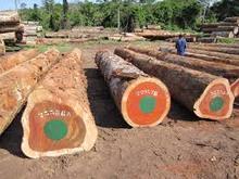 Oak Round Logs