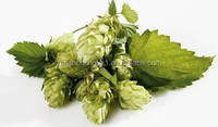 BV factory supply Beer hops extract powder