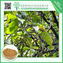 Hot Sale 100% Natural Pygeum Africanum Extract 2.5% phytosterols