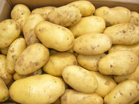 2014 Fresh Potato Price, 150g, 200g, 250