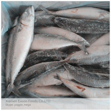 300-500G Pacific Mackerel Seafrozen Fish Chub Mackerel with Best Price