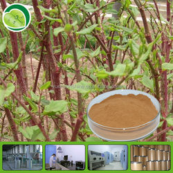 GMP FDA solvent extraction of resveratrol