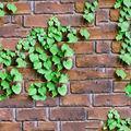 3d projeto da parede de tijolo de decoração, 3d wallpaper
