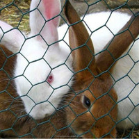 PVC coated wire mesh/rubber coated wire mesh/plastic chicken wire mesh