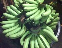 Lakatan Bananas from Gensan by Volume