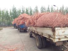Copper Scrap, Copper Wire Scrap, Mill Berry Copper 99%