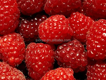 Excellent quality the new arrival palm leaf raspberry fruit extract
