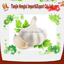 white organic garlic price competitive 1