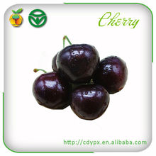 Fresh Sweet Cherry / Fresh Cherry Fruit /Red Cherry/ Wholesale for Low Price
