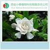 Animal Medicine Using Cape Jasmine Fruit P.E,10%-80% Gandenoside