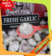 cheap price fresh natural garlic,from Jinnxiang