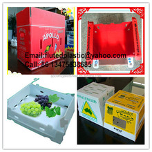 Collapsible double wall corrugated Corflute plastic moving boxes