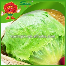 Inflatable Chinese pickled romaine iceberg lettuce