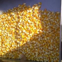 Bihar origin Maize for pasir gudang port, Malaysia