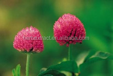 Factory Supply Isoflavones of Natural Red Clover Extract