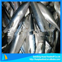 new arrival fresh frozen pacific mackerel fish with bottom wholesale price