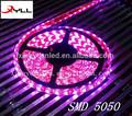 Ip68 rose, 1m-30 bande de led smd 5050/flexible led strip/led bande décorative pour la voiture ou les lieux de divertissement