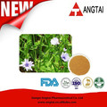Fornecimento a granel Cichorium Intybus L Extract / Chicory Root extrato inulina pó