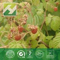natural raspberry extract 98% Raspberry Ketones