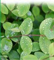 Chinese herb for Depression treatment , Pure Hypericum ,St. Johns Wort P.E