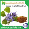 Natural forskolin 98% coleus forskohlii extract
