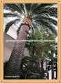 China guangzhou shengjie jardim decoração/artificial palma tronco de árvore decoração de casa