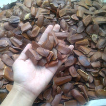Mahogany Seeds/Mahony Seeds (Indonesian Sky Fruit/Xiang Tian Guo)