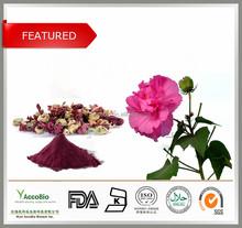 100% pura natureza antocianinas 5%- 25% flor de hibisco p. E e. Hibiscus/p. E e.