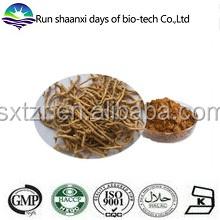 Natural Polygala Root Extract / Polygala tenuifolia root Extract / Thinleaf Milkwort Root Extract Powder