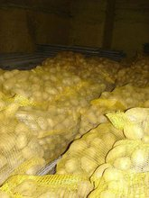 Fresh potatoes from Poland!