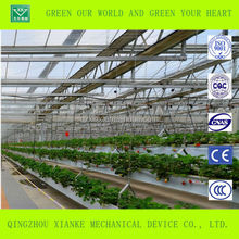 Small strawberry greenhouse covered thin film