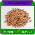85-110pcs/100g cultura agrícola faba feijão fava
