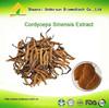 Yarsagumba Extract, Cordyceps Sinensis capsule, Cordyceps Mycelia extract