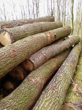 Europena Hardwood Round Logs