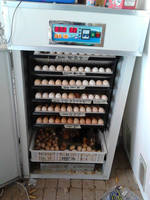 Incubators improve poultry production 880 eggs incubator