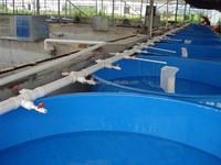 large commercial grp aquaculture fiberglass fish tank