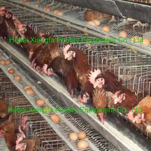 professional chicken galvanized breeding cages for chicken
